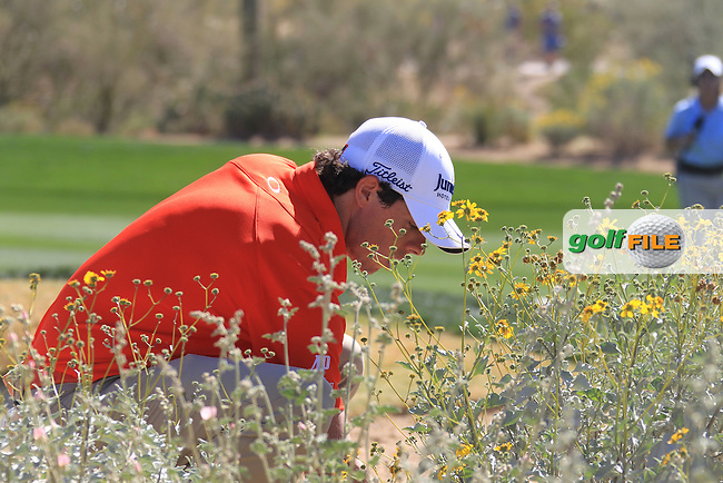 Rory McIlroy (NIR) checking out his ball in the bush on the 10th on day 4 Saturday quarterfinal at the WGC - Accenture Match Play Championship,Ritz-Carlton GC, Dove Mountain, Marana, Arisona, USA..22 Feb 2012 - 26 Feb 2012.Picture: Fran Caffrey www.golffile.ie