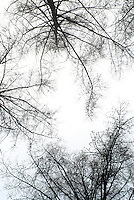 Bare trees on white