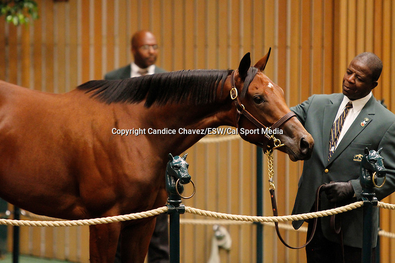 September 15, 2015: Hip 274 Distorted Humor - Folklore filly consigned by Taylor Made Sales.  Candice Chavez/ESW/CSM