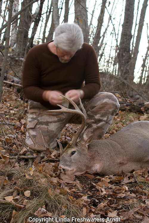 Bowhunter tagging his harvested 10-point white-tailed deer