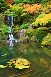 Heavenly Falls is surrounded by Fall color of maple tree leaves with a water lily in the pond and time exposure leaves streaks on the water gives motion to this photo from the Portland Japanese Garden