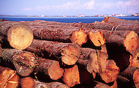 Logs Bound for Sale, Port Angeles, Washington, US