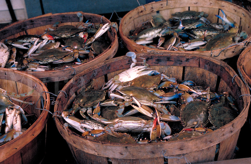 Fresh Blue Crabs from the Chesapeake bay on sale at a Washington, DC fish market.