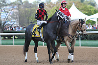 HOT SPRINGS, AR - March 18: Petrov #4 in the post parade before finishing fourth in the Rebel Stakes (Gr.2) at Oaklawn Park on March 18, 2017 in Hot Springs, AR. (Photo by Ciara Bowen/Eclipse Sportswire/Getty Images)