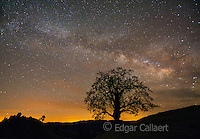 Milky Way, Coast Live Oak, Los Padres National Forest, Big Sur, Monterey County, California