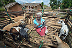 Chris Mbano raises goats in Kaluhoro, Malawi. With support from the Ekwendeni Hospital AIDS Program, she and other villagers here participate in a Building Sustainable Livelihoods program, working together to earn and save money, raise more nutritious food, receive vocational training, and better prepare young children for school. She bought her initial goats with financial assistance from a program-supported savings group which she belongs to.