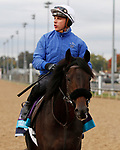 October 30, 2018 : The Black Album in preparation for the Breeders' Cup on November 01, 2018 in Louisville, KY.  Candice Chavez/ESW/CSM