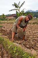 Borobudur, Java, Indonesia.  Farmer Hoeing his Field in Preparation for Planting.