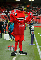 17th November 2019; Anfield, Liverpool, Merseyside, England; Womens Super League Footballl, Liverpool Women versus Everton; Liverpool FC mascot Mighty Red before the kick off - Editorial Use