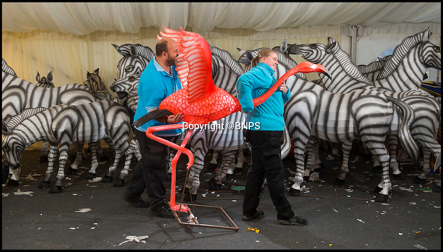BNPS.co.uk (01202 558833)<br /> Pic: PhilYeomans/BNPS<br /> <br /> A freshly finished Flamingo is carried out past a herd of Zebra.<br /> <br /> The largest Chinese 'Festival of Light' seen in Europe is taking shape at the Longleat House in Wiltshire - A small army of over 50 skillled workers have flown in from the remote village of Zigong in central China to create the stunning spectacle.<br /> <br /> Among the different scenes are a 20-metre tall Chinese temple, a 70-metre-long dragon, created using more than 10,000 porcelain cups, bowls, plates and dishes, and the mythical qilin – a chimerical hooved creature with the head of a lion – featuring more than 30,000 glass phials filled with coloured liquid.<br /> <br /> Massive traditional Chinese masks are also featured and there is also a bamboo forest which is home to a family of life-size pandas, giant elephants, zebras, lions and deer as well as giant lotus flowers floating on the lake.<br /> <br /> Filled with thousands of LED lights and handmade by a team of 50 highly-skilled craftsmen from Zigong in China's Sichuan province, the lanterns recreate a magical world of myths and legends.<br /> <br /> Set amid the beautiful backdrop of the landscaped grounds and gardens surrounding Longleat House, the lit structures also spill out on to Half Mile Lake to create a stunning and enchanting experience for visitors.<br /> <br /> It's the first time a festival of this size has taken place in the UK and the Chinese team behind the spectacular event believe its size and complexity make it unique throughout Europe.
