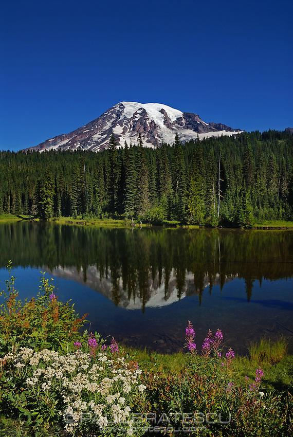 Wildflowers and Mount Rainier from Reflection Lake, Mount Rainier National Park, Washington