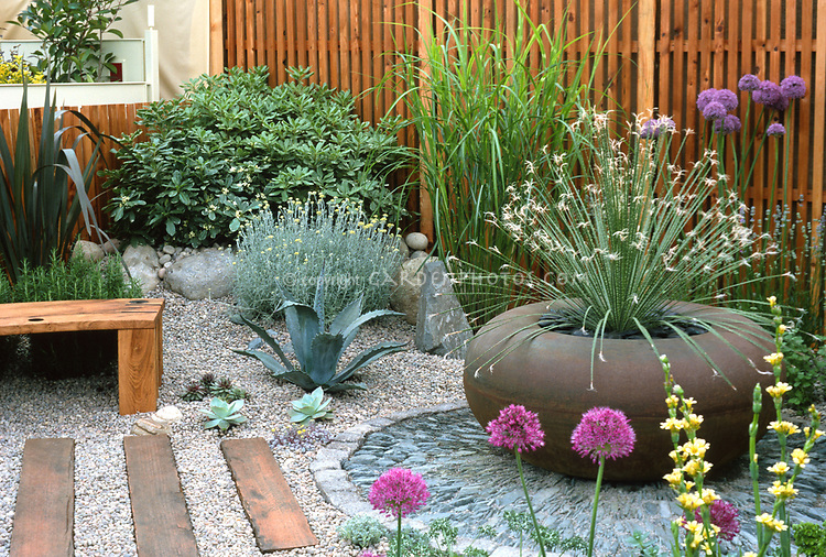 Dry landscape: Using succulents, allium, aloe, rosemary herbs & other drought-tough tolerant plants with pebble patio, Mediterranean style garden. Dasylirion flowering in pretty container