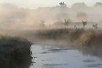 Mist over Creek and Field at Sunrise