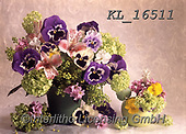Interlitho-Helga, FLOWERS, BLUMEN, FLORES, photos+++++,flowers,KL16511,#f#, EVERYDAY