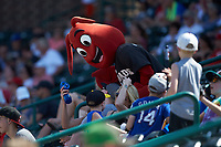 "Hickory Crawdads mascot ""Conrad"" interacts with fans during the South Atlantic League game against the Greensboro Grasshoppers at L.P. Frans Stadium on May 26, 2019 in Hickory, North Carolina. The Crawdads defeated the Grasshoppers 10-8. (Brian Westerholt/Four Seam Images)"