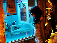 Two penguins called Sebastian and Rottenmaiyer at the Penguin Izakaya Ryote in Tokyo.  The eight and nine year-old penguins have been in the restaurant that specializes in fish for the past six years. The three and a half kilo 70 cm tall birds are originally from South Africa and they get through 25 fish meals of horse mackerel and sardines each day.. .Photo by  Richard Jones/ Sinopix.