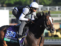 Summer Applause, trained by Chad Brown, trains for the Breeders' Cup Filly & Mare Sprint at Santa Anita Park in Arcadia, California on October 30, 2013.