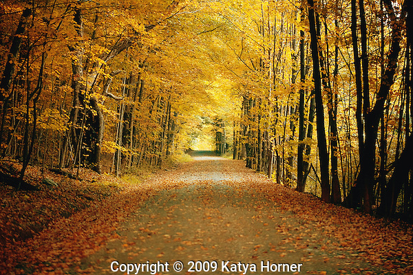 A foliage-covered road in upstate New York at the start of autumn.