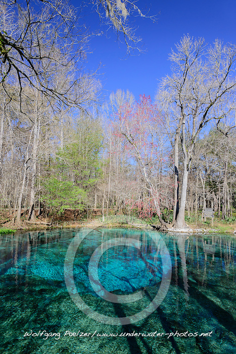 Halb Halb Aufnahme von Quelltopf Ginnie Springs, split level picture from Ginnie Spring, Clear swelling pot, High Springs, Gilchrist County, Florida, USA, United States