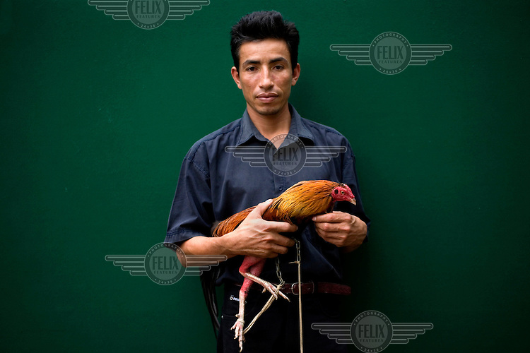 A man stands with his rooster before it fights.