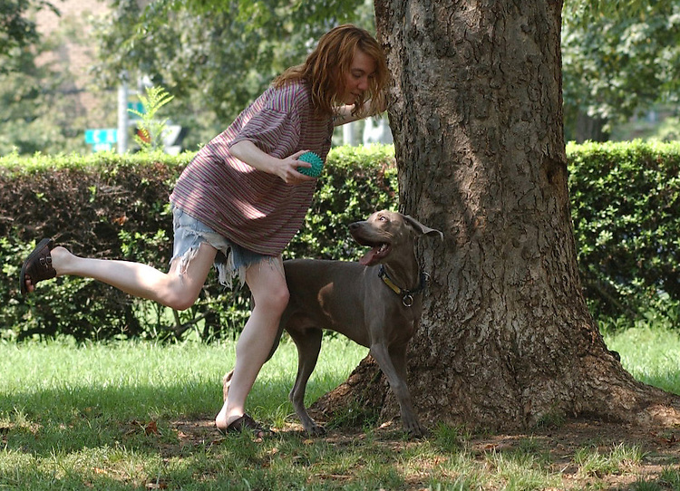 5dog081401 - Mingus, a seven month old Weimaraner, goes after his owner Dawn Harris in Stanton Park, Tuesday afternoon.