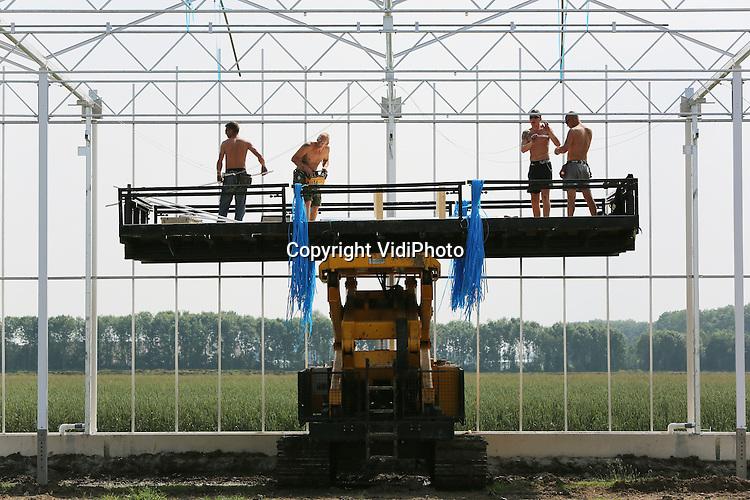 Foto: VidiPhoto<br /> <br /> ZUILICHEM - Kassenbouwers van Havecon en Aad Voorwinden uit Bleiswijk werken maandag in hun blote bast aan een enorme kas van de Gebr. Van Tuijl uit Brakel. In Zuilichem in de Bommelerwaard wordt door de chrysantenkweker een ultra-moderne bloemenkas neergezet van 7,5 ha. Deels is dat uitbreiding en voor een deel ook vervanging van een 20 jaar oude kas in Brakel. Het kassencomplex krijgt straks diffuus glas uit China, dat meer licht doorlaat dan normaal glas. Daardoor hoeft er straks minder belicht te worden. Daardoor worden kosten bespaard, maar ontstaat er ook minder lichtvervuiling. Chrysantenkweker David van Tuijl ziet na de crisis nu de afzet van chrysanten weer aantrekken, met name richting Oost-Europa.