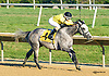 Uptown Dannys Boy winning at Delaware Park on 9/16/15