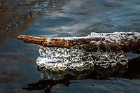 Is på gren vid fors i Nyfors i Tyresö
