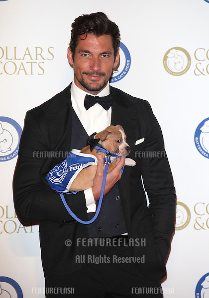 David Gandy arriving for the Collars And Coats Ball, at Battersea Evolution, London. 07/11/2013 Picture by: Alexandra Glen / Featureflash