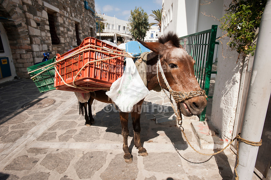 Donkey with baskets on the street, Naoussa, Greece.
