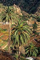 Spanien, Kanarische Inseln, Gomera, Tal von Macayo bei Vallehermoso