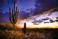 McDowell Mountain Saguaro Sunset - Arizona - Scottsdale - Sonoran desert