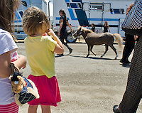 Sisters Maia and Elise Terry watch as Miniature horse Troubadour is led off the transport truck and into the stables on July 13, 2012. The horses of Cavalia arrived in San Jose, at their signature White Big Top, for performances through August.