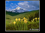 Sometimes you've got to be patient. If you want sun on the summit, sun on the flowers, no wind.<br /> Beargrass and Mt Hood, Oregon. .  John offers private photo tours throughout the western USA, especially Colorado. Year-round.