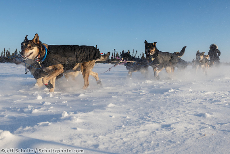 Jessie Royer teams runs through drifted snow as she approaches the Cripple checkpoint on Thursday, March 6, during the Iditarod Sled Dog Race 2014.<br /> <br /> PHOTO (c) BY JEFF SCHULTZ/IditarodPhotos.com -- REPRODUCTION PROHIBITED WITHOUT PERMISSION