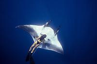 woman freediver and manta ray, Manta birostris, Mexico, Pacific Ocean
