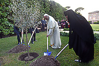 Pope Francis Israeli President Shimon Peres, Palestinian President Mahmoud Abbas and Orthodox Patriarch Bartholomew plant an olive tree saplings following a joint peace prayer at the Vatican's garden's.June 8, 2014