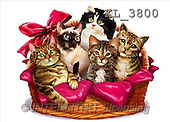 Interlitho, Lorenzo, REALISTIC ANIMALS, paintings, 5 cats, basket(KL3800,#A#) realistische Tiere, realista, illustrations, pinturas ,puzzles