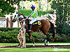 Thess Is Awesome before The Delaware Park Arabian Juvenile Championship (gr 3) at Delaware Park on 9/28/13