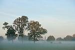 Europa, DEU, Deutschland, Nordrhein Westfalen, NRW, Rheinland, Niederrhein, Leuth, Naturpark Schwalm-Nette, Morgenstimmung, Nebel, Typische Landschaft, Baeume, Kategorien und Themen, Natur, Umwelt, Landschaft, Jahreszeiten, Stimmungen, Landschaftsfotografie, Landschaften, Landschaftsphoto, Landschaftsphotographie, Wetter, Wetterelemente, Wetterlage, Wetterkunde, Witterung, Witterungsbedingungen, Wettererscheinungen, Meteorologie, Wettervorhersage....[Fuer die Nutzung gelten die jeweils gueltigen Allgemeinen Liefer-und Geschaeftsbedingungen. Nutzung nur gegen Verwendungsmeldung und Nachweis. Download der AGB unter http://www.image-box.com oder werden auf Anfrage zugesendet. Freigabe ist vorher erforderlich. Jede Nutzung des Fotos ist honorarpflichtig gemaess derzeit gueltiger MFM Liste - Kontakt, Uwe Schmid-Fotografie, Duisburg, Tel. (+49).2065.677997, archiv@image-box.com, www.image-box.com]