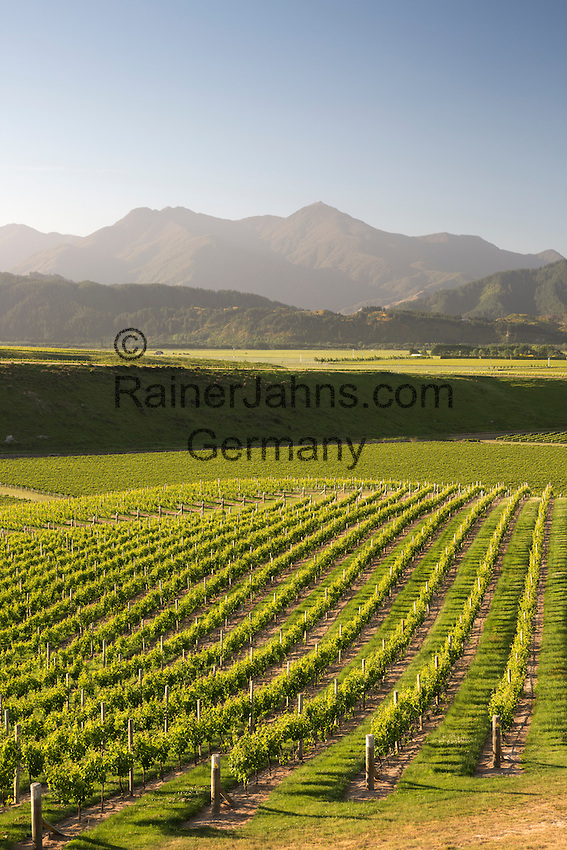 New Zealand, South Island, Marlborough Region, Renwick near Blenheim: Vineyards along Delta Lake Heights Road | Neuseeland, Suedinsel, Marlborough Region, Renwick bei Blenheim: Weinberge an der Delta Lake Heights Road