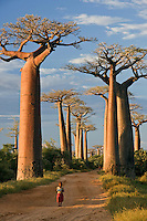 Young girl walking on the baobab avenue