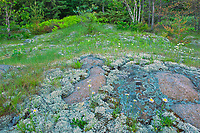 Lichens on rock on the shore of Blindfold Lake<br />