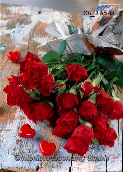 Interlitho-Alberto, FLOWERS, BLUMEN, FLORES, photos+++++,red roses,KL16545,#f#, EVERYDAY ,rose,roses,