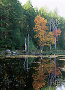 Fall colors around a wetlands area in New Hampshire, USA, which is part of New England