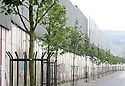 Newly planted trees litter the main peace line wall beside Cupar Way in west Belfast keeping both the Catholic Falls area and Protestant Shankill areas apart. Photo/Paul McErlane.