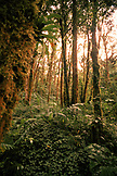 PANAMA, David, Guadalupe, Los Quetzales Lodge, lush green cloud forest, Volcan Baru National Park and Cloud Forest of Friendship International Park, Central America