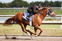 #47.Fasig-Tipton Florida Sale,Under Tack Show. Palm Meadows Florida 03-23-2012 Arron Haggart/Eclipse Sportswire.