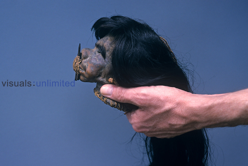 A human shrunken head or tsantsa that had been used for ceremonial purposes.  The pegs inserted through the lips to contain the avenging spirit or muisak are easily visible.  The size at the completion of the shrinking process is about that of a human fist, as can be seen in the photo.