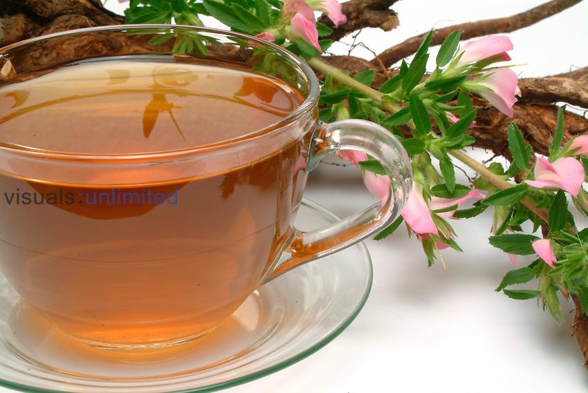 Tea made from Restharrow (Ononis spinosa)